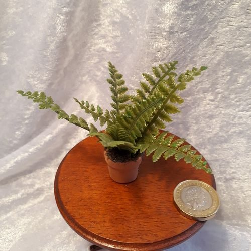 Large Potted Fern