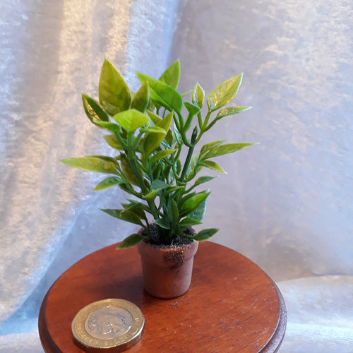 Potted Foliage Plant 5