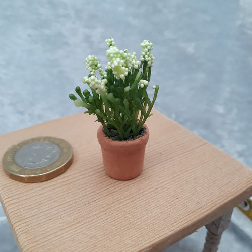 Potted Flowering Plant 8